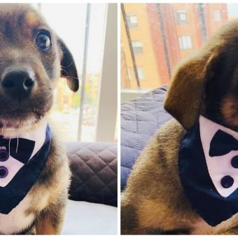 Homeless Pup Wears Tuxedo For Adoption Day But His New Owner Fails To Show Up