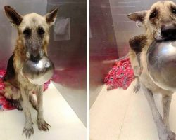 Dog Wants Someone To Notice Her, So She Picks Up Her Bowl And Stares Longingly
