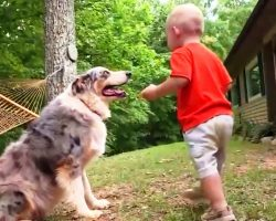Mom & Dad Panic As Dog Pounces On Baby In The Yard, Then They See Baby's Foot