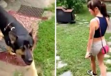Dog Was Kept Out In Freezing Cold All His Life, Woman Shows Him Meaning Of Love