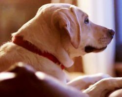 Dog Gets Worried Sick When Dad Doesn't Return Home After A Night Of Drinking