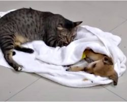 Tiny Pup Fights To Live After Savage Beat Him & Caring Cat Won't Leave Him
