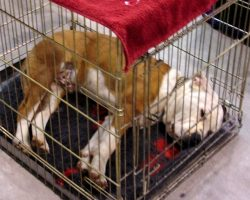 Instead Of Training Their Dog To Accept The Crate, They Just Stuffed Him Inside
