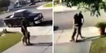 Police Want The Public To Help Identify The Man Who Punched And Kicked His Dog