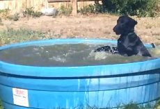 Man Catches His Dog On Camera Having Fun In The Kiddie Pool