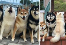 Mom's One Dog Always 'Ruins' Her Attempts At Taking Nice Family Portraits