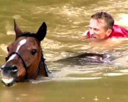 "Man Helps Save 25 Horses Drowning In Floods, They Call Him ""Hero Of The Horses"""