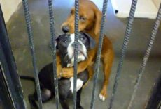 Dogs Were About To Be Euthanized, But They Hug Each Other And Refuse To Let Go