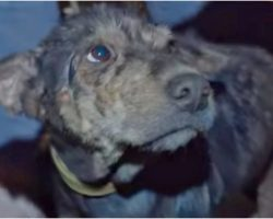 Feeble Dog Chained Up For 5 Years Wept As Rescuer Held Her Face In Her Hands