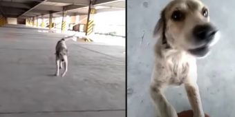 Dog Who Went Missing For 3 Months Cries Upon Seeing His Dad Again