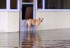 Family Abandons Their Dog During A Flood, Don't Even Bother Coming Back For Him
