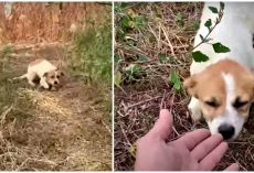 Harmed Puppy Tired Of Running Digs Deep To Accept His Hand Before Sky Erupts