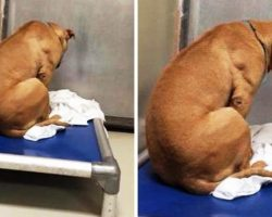 Dog Is Broken After His Adoption Falls Through, So He Stares At A Wall All Day