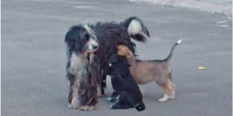 Matted Mom Wouldn't Let Anyone Near, Puppies Pawed At Her & Couldn't Nurse