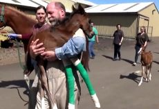 Horse Delivers Rare Twin Foals, Vet Carries One In His Arms To Help Him Survive