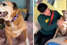 Dog Came To Shelter As A Puppy, But Years Of Rejections Later, She's Grown Old