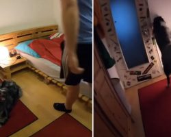 Dad Leaves Dog Alone, And Dog Is Recorded Hitting The Lights & Tucking Into Bed