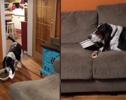 Spoiled Pup Takes His Food Dish To The Couch To Be Comfortable While Eating