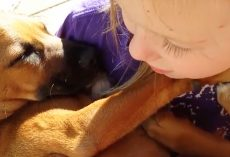 Little Girl Improvises Adorable Lullaby While Holding Her Rescue Dog