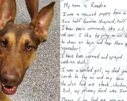 Dog Found Wandering The Street With A Note In A Bottle On Her Collar