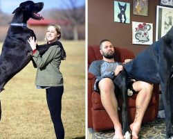 They Thought They Were Raising A Dog, But He Turned Out Bigger Than Some Horses