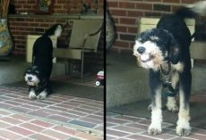 Dog Flashes Smiles For Mom When Seeing Her Come Home After A Long Day