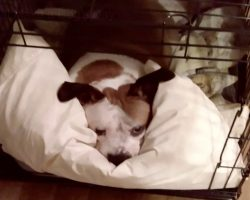 After 756 Days In The Shelter, Nine-Year-Old Beagle Mix Finds Forever Home