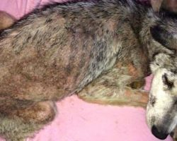 Dog Was Abused And Thrown Away On The Busy Highway, But She Was Not Alone
