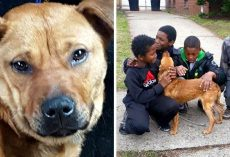 Owner Tries To Suffocate Dog Using Bungee Cord, But Kids Find Her Just In Time