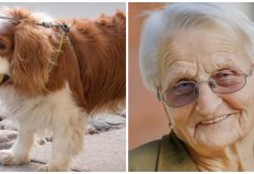 93-Year-Old Woman's Tiny Spaniel Missing For 2 Days So She Calls Police In Tears