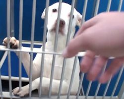 All Dogs In Shelter Get Adopted On Adoption Day, But One Dog Gets Left Behind