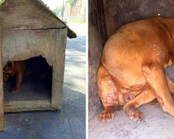 Owner Nails Shut A Dog House And Leaves It On The Street To Get Hit By A Car