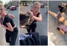 Unhinged Lady Hurls Puppy At Man During Racist Rant, Man Decides To Keep Him