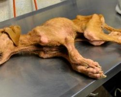 They Save Abused Dog From Brink Of Death, Dog Repays Them By Saving Their Son