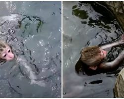 Baby Monkey Falls Into Frigid Water, Thrashes Around But Cannot Pull Herself Out
