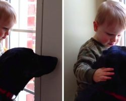 Pet-Sitter's Son Pets And Comforts Sad Dog Who Was Missing His Family Awfully