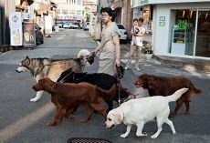 Chinese County Bans Dog-Walking, Says They'll Kill Dogs Of Owners Who Break Rule