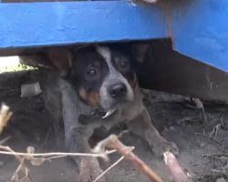 Abandoned Dog Hid Under A Dumpster For 11 Months As Terrified As Can Be