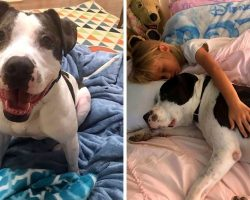 """Dog Was Labeled """"Bad With Kids"""" And Thrown Out, But He Wants To Prove Them Wrong"""