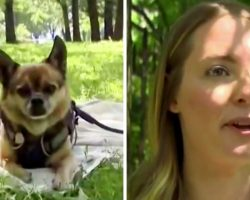 Woman Sees A Couple Walking Her Stolen Dog, Walks Up And Snatches Her Dog Back