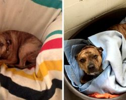 Lonely Dog Gets Rejected Over 18,000 Times, Gives Up Hope And Shuts Herself Off