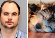 Man Corners Girlfriend's Dog, Ruthlessly Kicks The Dog As The Dog Yelps In Pain