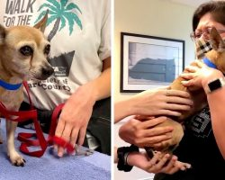 Woman Has Greatest Birthday Ever As Her Lost Dog Is Found After 6 Long Years