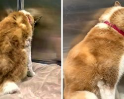 Unloved Dog Buries Her Face In A Corner In An Attempt To Become Invisible Again