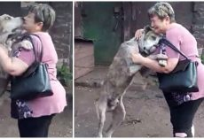 Woman Gets Choked Up Seeing Her Dog Who Was Stolen From Her Yard 2 Years Prior