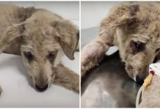 Badly Beaten Puppy Felt Unworthy, Looked At His Paw & Realized He Matters