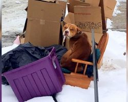 Family Moved Out And Left Dog Behind With The Trash, But They Took The Other Dog