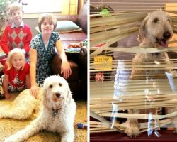 Dog Follows His Kids To School, Gets Caught And Sent To The Principal's Office