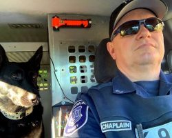 K9 Gets Busted Trying To Steal His Partner's Driver Seat While Partner Is Away
