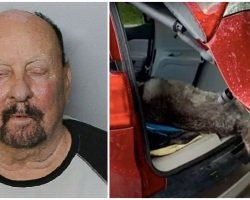 Man Left 17-Year-Old Dog In Trunk Overnight 'So Neighbors Wouldn't Hear His Cries'